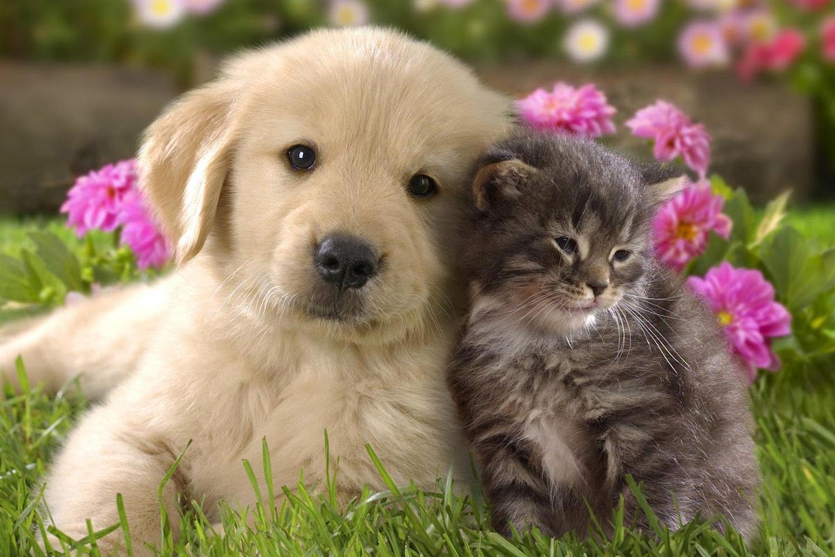 veterinaria-farmacia-treviso